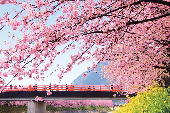 2020 Sakura Forecast Shizuoka