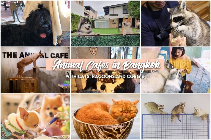 ANIMAL CAFE BANGKOK COLLAGE