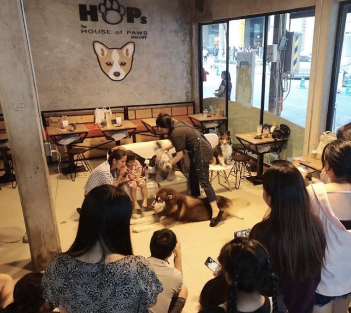 HOPS DOG CAFE