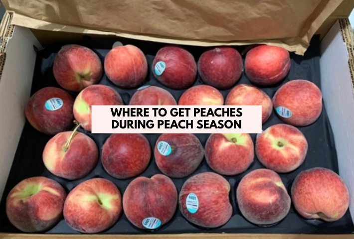 PEACH SEASON COVER PHOTO