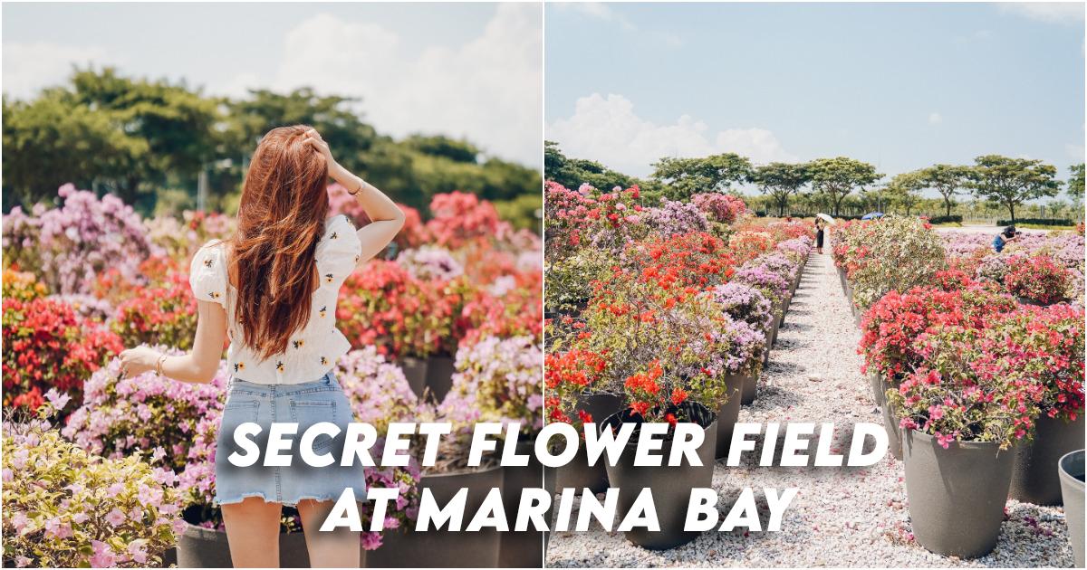 Marina Bay Flower Fields