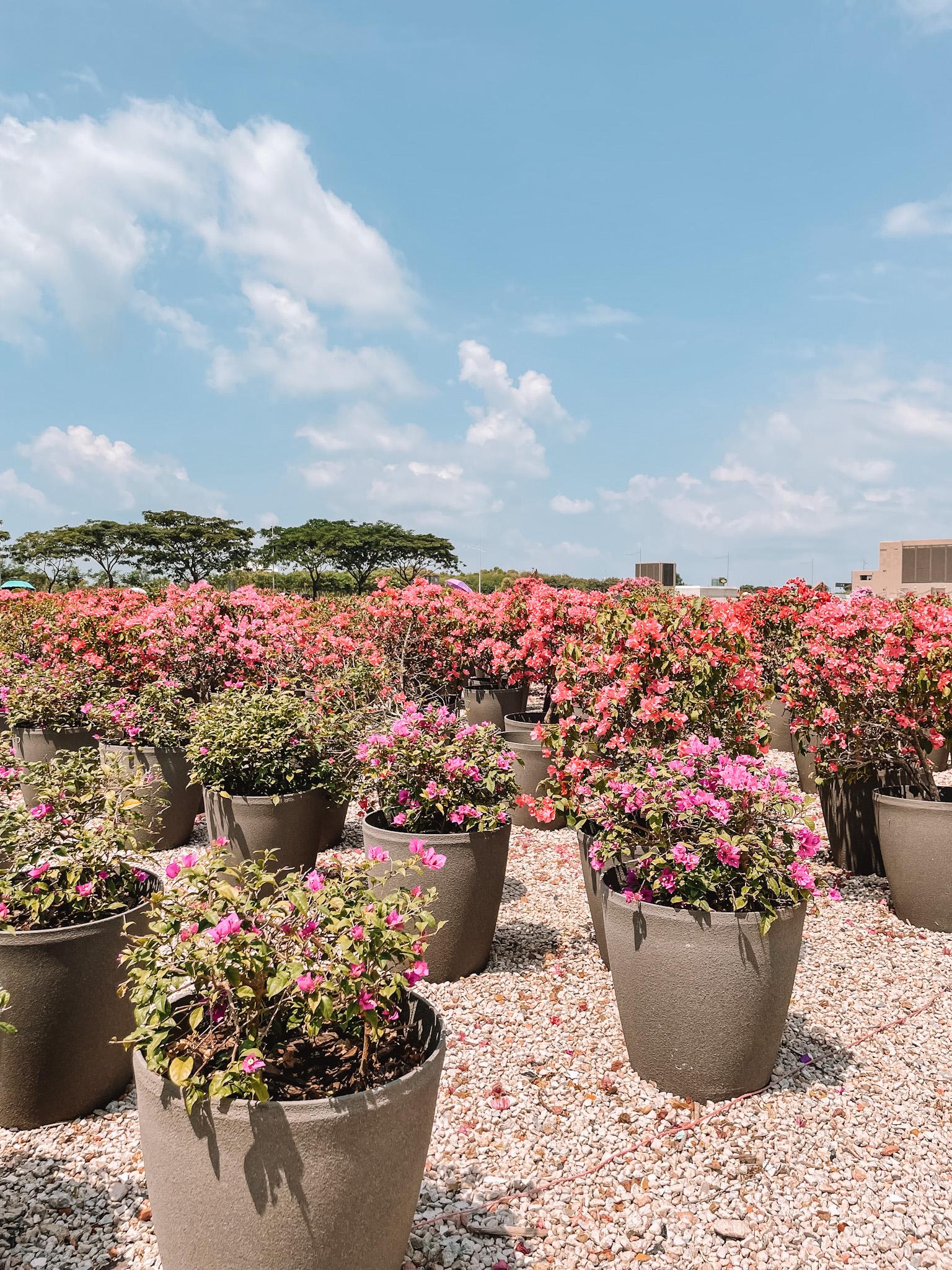 Marina Bay Flowers